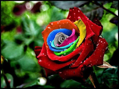Best Beautiful Colorful Flowers For Valentines Days