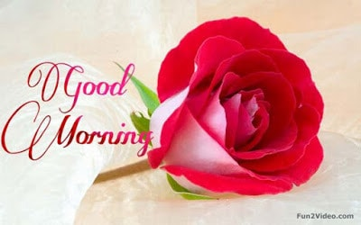 Nice good morning text messages to send your girlfriend with Images